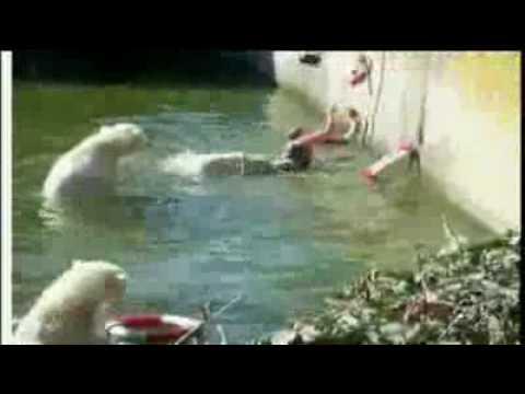 Mujer Atacada Por OSOS Polares