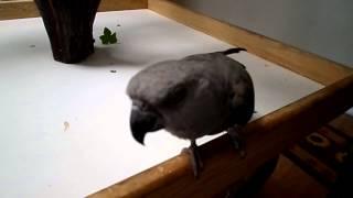 loving parrot