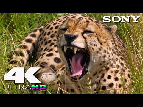 4K Ultra HD | SONY 4K UHD Demo: Another World (Africa)