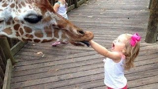Funny Kids at The ZOO - TRY NOT TO LAUGH