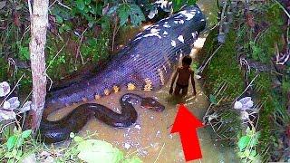 أخطر 10 كائنات مميتة فى نهر الأمازون