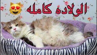 قطه تلد 4 صغار جميله جداً / Mohamed Vlog