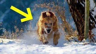 وجد كلب طفل صغير تخلت عنه أمه في درجة حرارة منخفضة  ، أنظر ماذا فعل