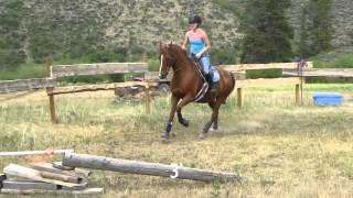 Me and My horse Jumping  3'6