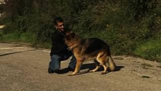 Osman Aga'ya Köpek Saldırır