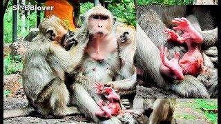 Small Monkey Worry Sasha Carry Newbaby Upside Down - SP BBlover - Jessie Hurt Cry