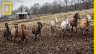 Photographing the Strength and Beauty of Rescued Horses   National Geographic