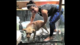 Sunny Leone Bathing Her Dog Video
