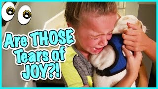 🙃 DO WE GET A FRENCHIE? NO CRYING ALLOWED! 🙃SMELLYBELLY TV VLOGS