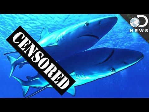 Xxx Mp4 How Do Sharks Have Sex 3gp Sex