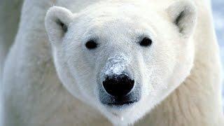 Dans la peau d'un prédateur : Pôles