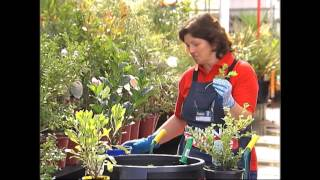 How To Grow Plants From Cuttings - DIY At Bunnings