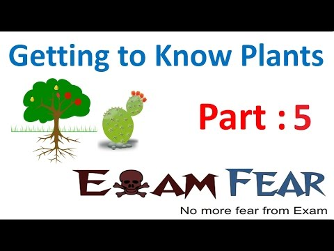 Biology Getting to Know Plants Part 5 (Stem modification: Thorns, Aerial & Sub aerial) Class 6 VI