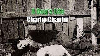Charlie Chaplin - Nap Time (A Dog