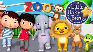 Zoo Song   Animal Song   Plus Lots More Nursery Rhymes   From LittleBabyBum!