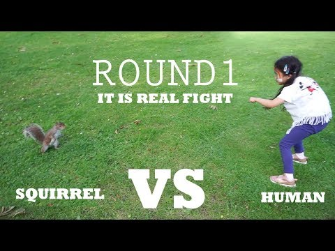 Animals never fail to make us laugh Funniest Squirrel Videos Fight Squirrel VS Human Real Fight
