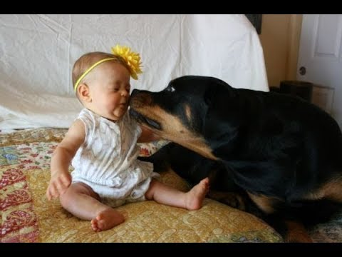 Xxx Mp4 Top 10 Best Of Cute RottWeiler And Babies Playing Videos Compilation Funny Dog And Baby Videos 3gp Sex