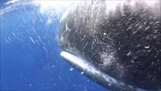 Whalesnorkeing With Nature-Minds In Sri Lanka Mirissa