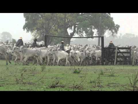 Comitiva Pantaneira Fazenda Santa Therezinha. Pantanal MS