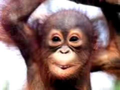 Anak Monyet Bersetubuh Dengan Wanita Cantik