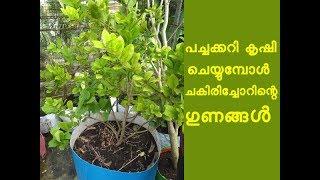ചെടികള് പെട്ടന്ന് വേരുപിടിക്കാൻ ചകിരിച്ചോറ് Krishi Lokam Malayalam Yutuber Annie