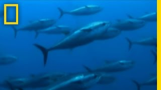 Catching Giant Tuna | Hooked