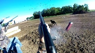 Out of Control! Pigeon Hunting in a Cattle Pen