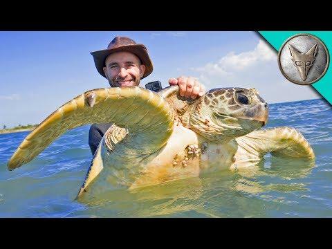 Catching Sea Turtles