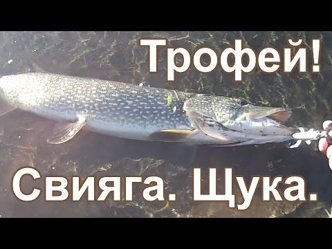 видео ловля рыбы на уокеры видео
