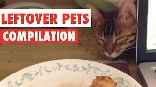 Leftover Pets Video Compilation 2016
