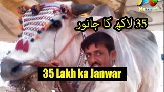 karachi Cow Mandi 2017  || 35 Lakh ka Janwar  || Eid ul Adha 2017  Part  7
