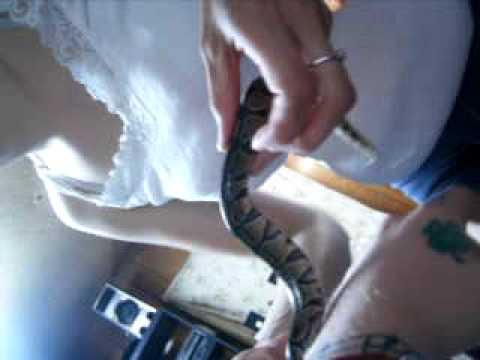 Liz putting the snake away (Vagina Dog2)