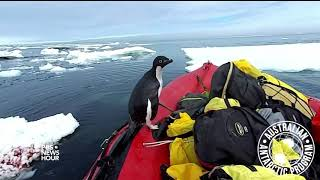 A curious penguin joins scientists for a cold-water cruise