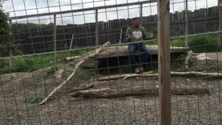 Jordan & The Arctic Wolf @ Animal Adventure Park, NY