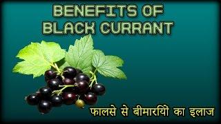 Benefits of Black Currant |  फालसे से बीमारियों का इलाज | IN URDU-HINDI