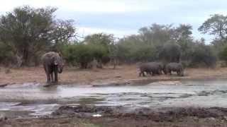 Elephant vs Rhino!