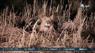 يوم جديد| محمية الدندر الوطنية بالسودان إحدى أكبر المحميات المفتوحة في إفريقيا