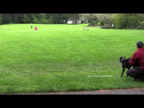 Maddy vs Usain Bolt 100m Dash m2ts