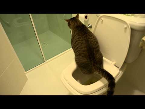 Frajola fazendo xixi no vaso sanitário