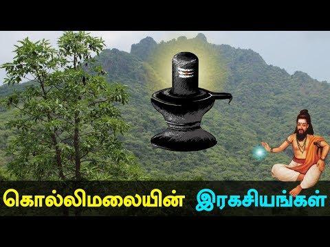 Xxx Mp4 Kollimali Secrets And History Of Kollipaavai In Tamil Kollimalai 3gp Sex