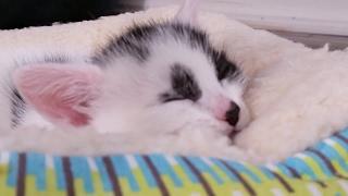 Kitten Close Up 2017-05-24