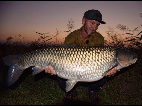 FEEDERMANIA Kiskunsági amur horgászat