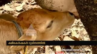 Kerala facing acute milk shortage