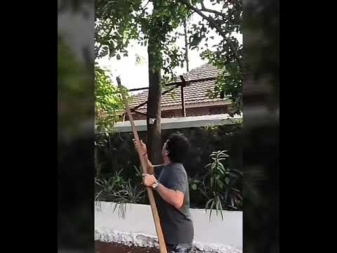 Xxx Mp4 Sachin Talk With His Fans And Plucking Nimboo From His Tree 3gp Sex