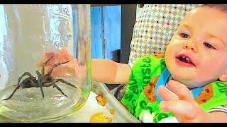 BABY LOVES GIANT SPIDER!!!