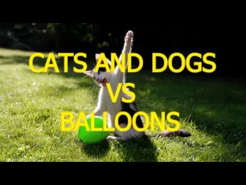 Cats and dogs vs balloons   Funny animal compilation