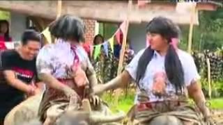 Survivor OPAY RUBEN BAJAK SAWAH PAKE KERBAU Di Citra Alam Riverside   Bogor  11 Juli 2015