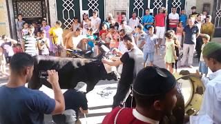 مراسيم ذبح العجل بمناسبة حفل الزفاف