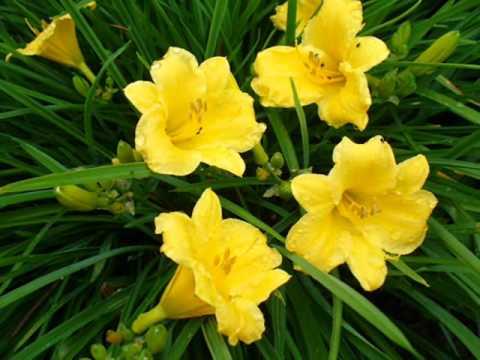 NAJPIĘKNIEJSZE KWIATY the most beautiful flowers