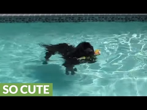 Xxx Mp4 Giant Dog Plays Fetch In Pool With Little Girl 3gp Sex